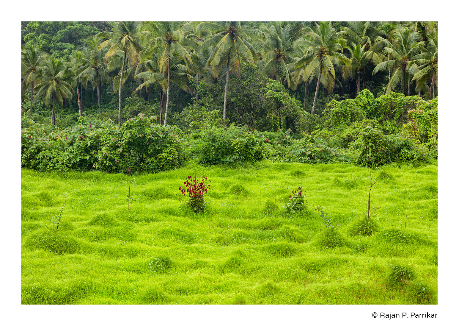 Porvorim-Green-Monsoon-Goa